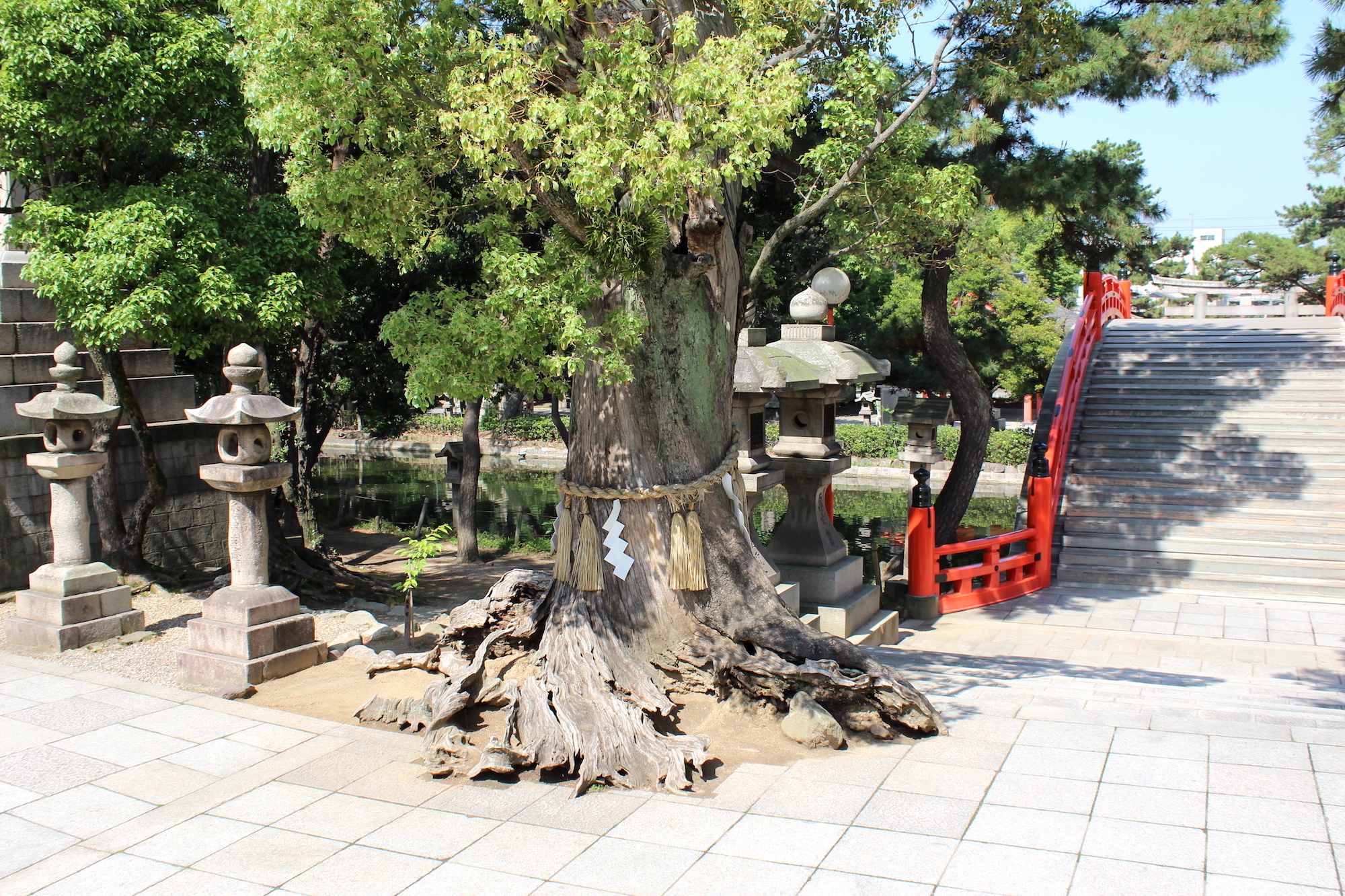Holy tree in Osaka shrine